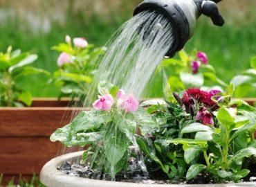 آبیاری و رویش گلها
