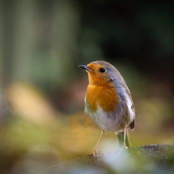 پرنده خیال پرداز