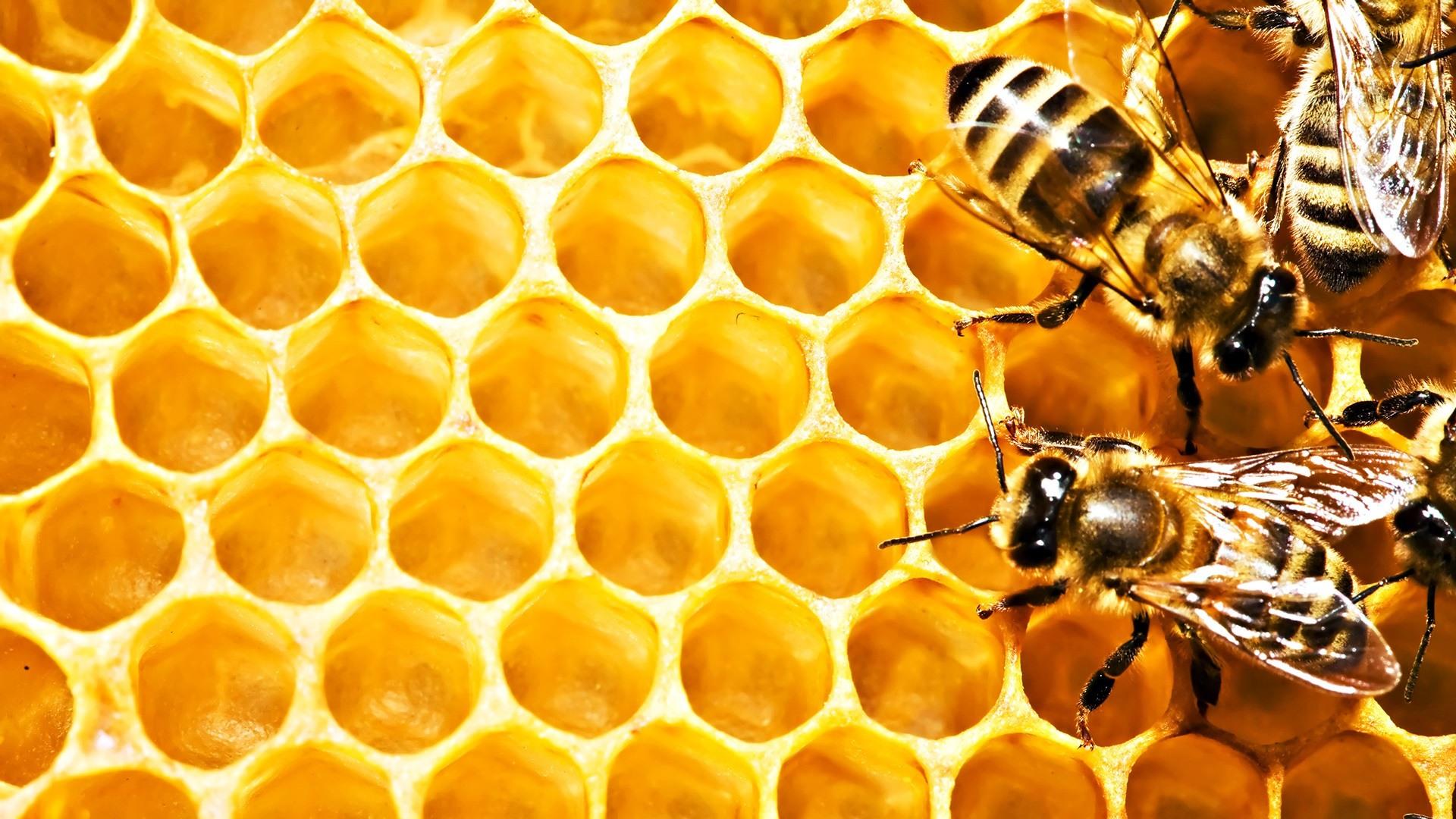زنبور عسل کندو عسل